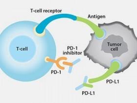 CD274(PD-L1)—助力肿瘤免疫逃逸&信号通路研究