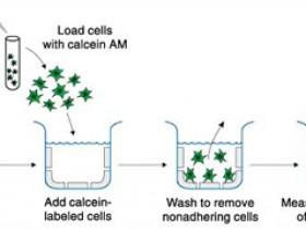 CultreCoat®细胞粘附分析试剂盒