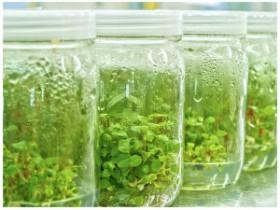 PPM抗菌剂—广谱型植物组培抗微生物剂Plant Preservative Mixture