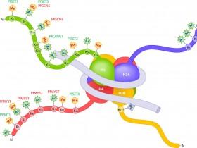 组蛋白H3K79甲基化研究方案——H3K79抗体与定量分析试剂盒