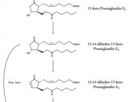 前列腺素E2(PGE2)ELISA试剂盒—最受欢迎的PGE2定量分析试剂盒