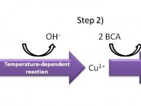 评估蛋白质的纯度和质量的五个方法