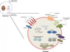 外泌体(Exosomes)检测—血液尿液体液培养液中外泌体定量方案