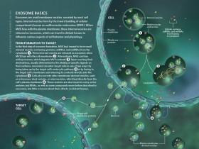 外泌体(Exosomes)分离提取—血液尿液体液培养液中外泌体提取方案
