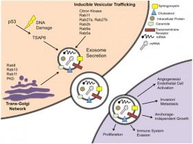外泌体(exosome)DNA/RNA快速分离提取解决方案—外泌体DNA/RNA提取试剂盒