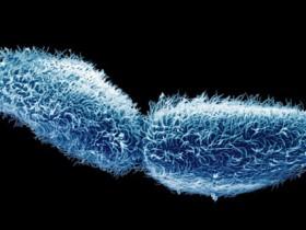 """别怀疑,哪怕是单细胞生物也具有""""智慧""""!"""