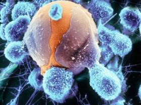 细胞吞噬(phagocytosis,IgG FITC/PE)分析试剂盒—吞噬研究新工具