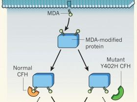 脂质氧化损伤(Lipid Peroxidation,MDA)检测试剂盒—为MDA的高灵敏检测而定制