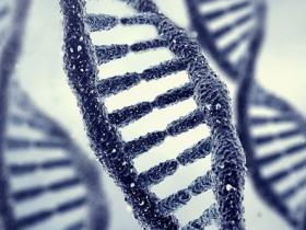 """""""垃圾基因""""非垃圾,新基因可以来自""""垃圾基因"""""""