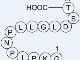 Abbkine——全能多效的V5标签单克隆抗体