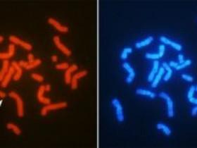 缺失Y染色体,安能辨它是雄雌?