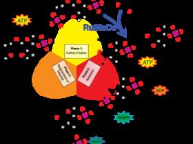 植物内参新选择-Rubisco(核酮糖二磷酸缩化酶)