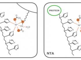 蛋白纯化实验,怎样选择合适的配基和金属离子?