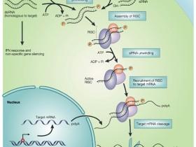 艾美捷推荐:活细胞RNA成像首选