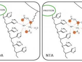His-tag:His组氨酸标签融合蛋白纯化精品