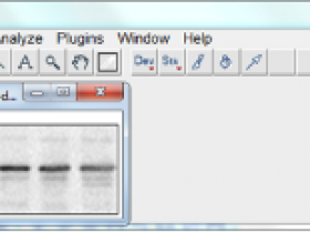Image J和Graphpad如何对Western Blot条带灰度分析【干货】