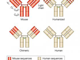 治疗性单克隆抗体纯化策略