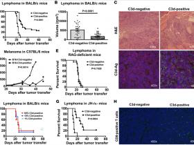 C3d补体系统研究推荐:补体系统或成为新的肿瘤治疗靶标