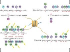 Epigentek-总组蛋白H3定量分析试剂盒(兼容各种样品类型)