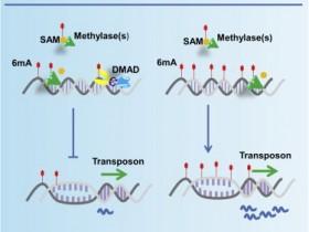 全球独家【m6A】DNA甲基化定量检测试剂盒