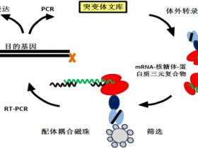 浅析抗体库技术的发展