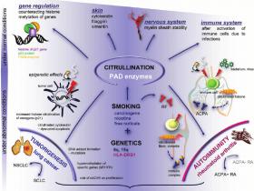 总组蛋白H3定量试剂盒-瓜氨酸化(Citrullination)修饰
