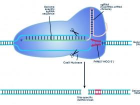 新手指南:如何设计CRISPR实验进行基因组编辑