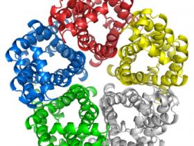Anti-Aquaporin 3抗体,高分引用,染色清晰
