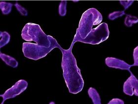 小鼠IgG亚型特异性抗体,你想要的荧光都能满足