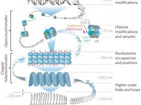 Abbkine皇冠抗体之表观遗传学篇
