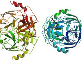 蛋白酶3 ELISA 试剂盒(PR3),皮克级高敏检测试剂盒