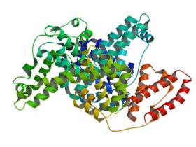 全球领先的牛血清白蛋白(BSA)定量分析试剂盒
