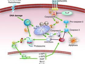 Caspase 9 全能抗体(IF,IHC,IP,WB),多种实验一个选择!