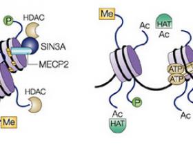 高选择性组蛋白去乙酰化酶HDAC3抑制剂,用了都说好