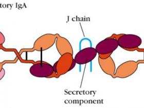 荧光直标人IgA抗体,做流式省时又省力