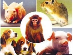 实验动物知多少