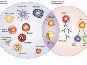 全球首款人全血-粒细胞(多形核白细胞)分离提取试剂盒