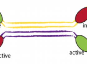 位点特异性重组酶介绍