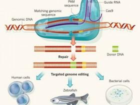CRISPR/Cas9(金黄色葡萄球菌)单克隆抗体,多种实验应用!