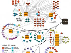 《Nature》认可:HDAC11选择性抑制剂