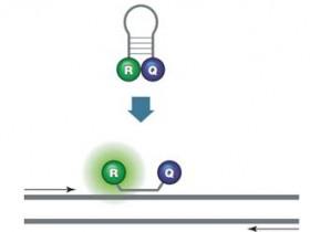 如何选择合适的qPCR探针