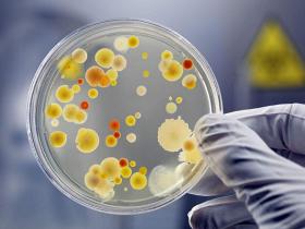 细菌培养所需组分索引