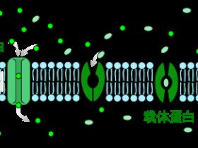 半抗原载体蛋白常见种类介绍