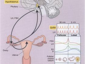 人促卵泡激素(FSH)ELISA试剂盒推荐:高灵敏度不要错过!