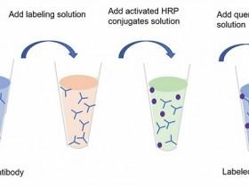 辣根过氧化物酶(HRP)偶联试剂盒,意想不到的简单快速!