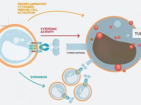 CAR-T细胞治疗之基石:抗体,蛋白,试剂盒