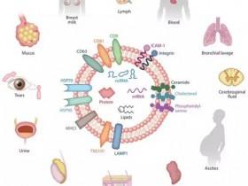 如何收集和保存外泌体样本?
