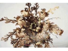 可以死而复活的神奇植物-含生草
