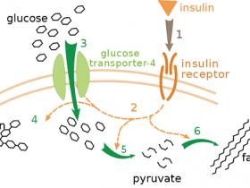 小鼠胰岛素(Insulin)ELISA试剂盒,操作简单便捷!