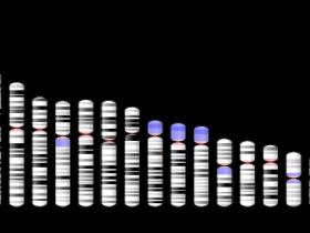 人源CD99 ELISA抗体对(Antibody pair):商品化文章验证